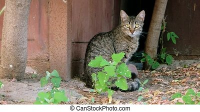 Tabby feral cat siting alone outdoors