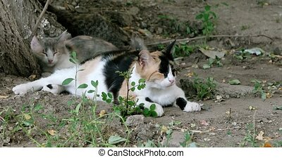 Three feral cats resting on the ground in warm day