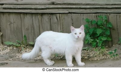 White cat outdoors Feral cat walking around wall