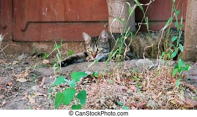 Tabby cat resting alone in summer day