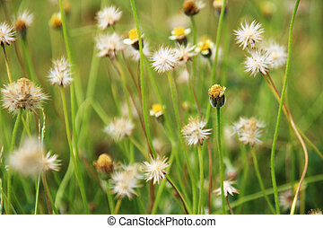 flower grass on natural background