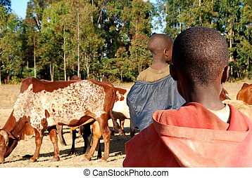 An African child watching another child herding cows - A...