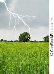 lightning in spring on a grain field