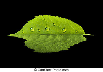 Leaf reflecting in water
