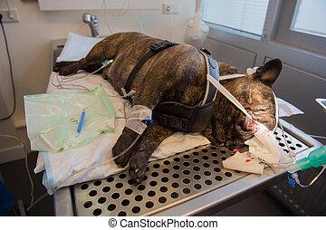 Dental care for dog