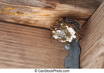 Hornets Nest - A close up view of a full hornet, or yellow...