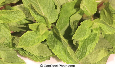 Mint herb on white background - A close view of fresh mint...