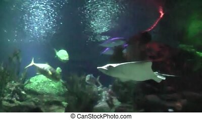 fish ramp underwater slow motion - floating in the aquarium,...