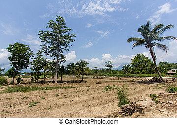 coconut tree with beauty sky in field