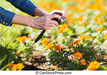 woman taking photo of flowers - close up of senior woman...