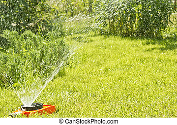 Watering green lawn on the site of a country house