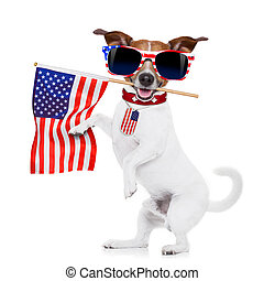 dog 4th of july - jack russell dog holding a flag of usa on...