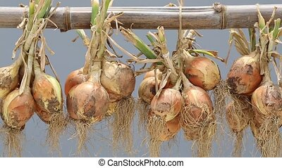 hanging bunch of onion, gray background