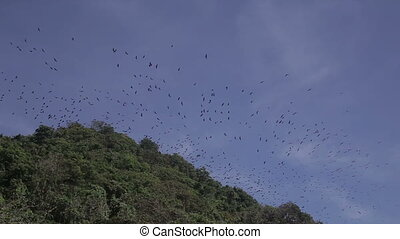 flying foxes on sland of Boracay