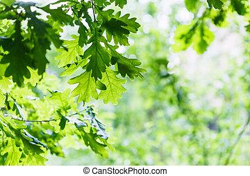 green oak leaves in summer rainy day - natural background -...