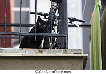 Curiosity in the eyes of a cat - Captures black cat sitting...