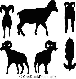 big horn sheep silhouette in walking pose - Vector Image -...