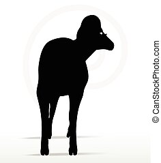 big horn sheep silhouette in twist head pose - Vector Image...