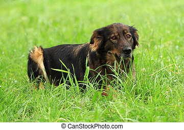 dog resting in the grass