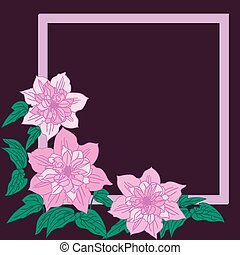 Pink terry clematis are on dark background. Vector...