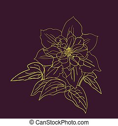 Terry flower clematis sketch. Gold outline on dark...