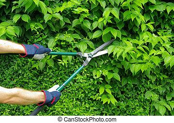 cut a hedge 08