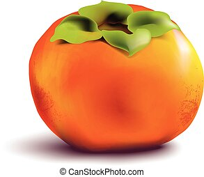 Fruit persimmon on white background Vector illustration