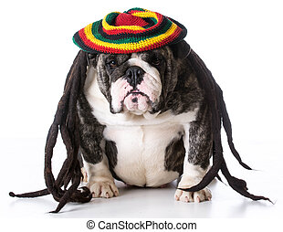 dog wearing wig - funny dog wearing dreadlock wig on white...