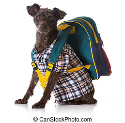 dog obedience - mixed breed wearing plaid shirt and backpack...
