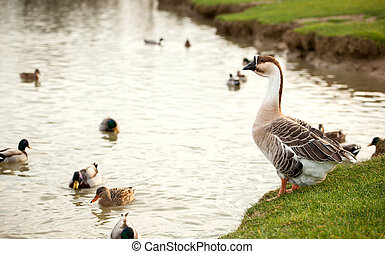 Different species of birds at Lake - Different species of...