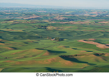 Farmland in early morning, Steptoe Butte State Park,...