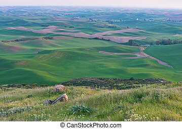 Farmland at dusk, Steptoe Butte State Park, Oakesdale,...