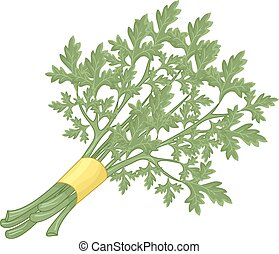 Parsley - Illustration of a Bunch of Parsley Stalks Bound...
