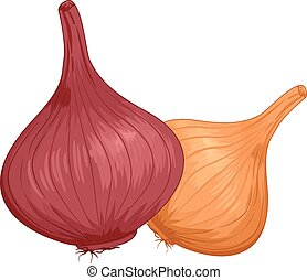 Onions - Illustration of a Pair of Onions With Different...