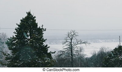 Trees During Heavy Snowfall and Village At Background Defocused