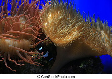 Underwater World - An image of live corals underwater