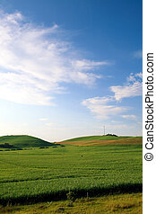 grassy field - a beautiful green grassy field with blue sky
