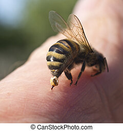 Bee Sting - a weapon of defense and - To protect bee uses...