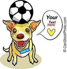futebol, cão