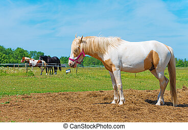 Horse with red bridle. Space for your text.