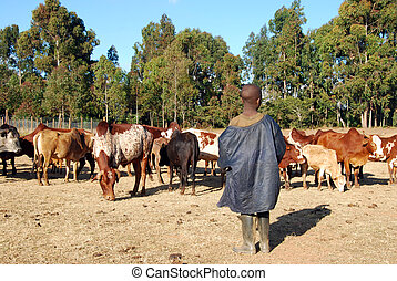 The guardian of cows - Tanzania - Africa - The guardian of...