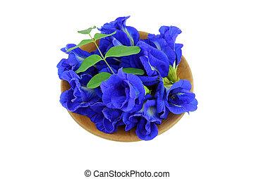 A bowl of Clitoria ternatea Butterfly Pea, Blue Pea,...