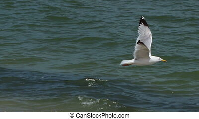 Seagull flying in the sky over the sea - Big white seagull...