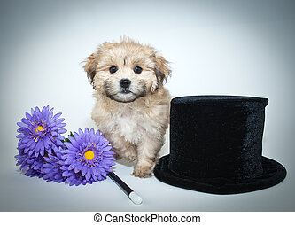 Abracadabra - Sweet puppy sitting with a top hat, flowers...