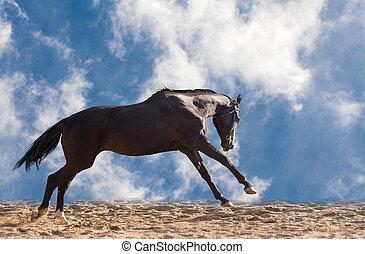 Brown horse - Dark brown horse g