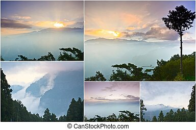 Alishan national park, Taiwan - Collection of Alishan,...