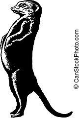 plump or pregnant meerkat - hand drawn, vector, sketch,...