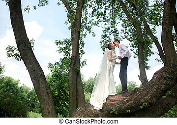 Bride and groom on the tree - beautiful couple spends a fun...