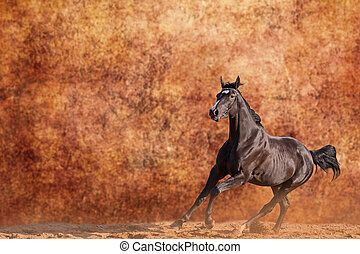 Galloping horse - Young Budyonny horse galloping against...