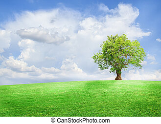 Field,tree and blue sky - Green tree on a field with blue...